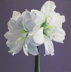 Amaryllis Acrylic on Canvas