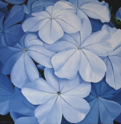 Plumbago Acrylic on Canvas