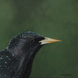 Starling Acrylic Painting