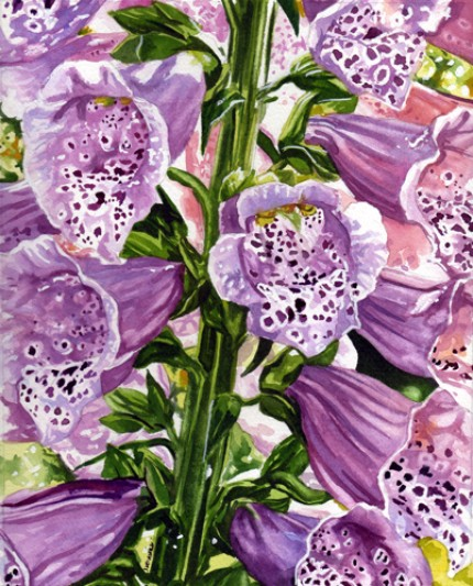 botanical_foxgloves