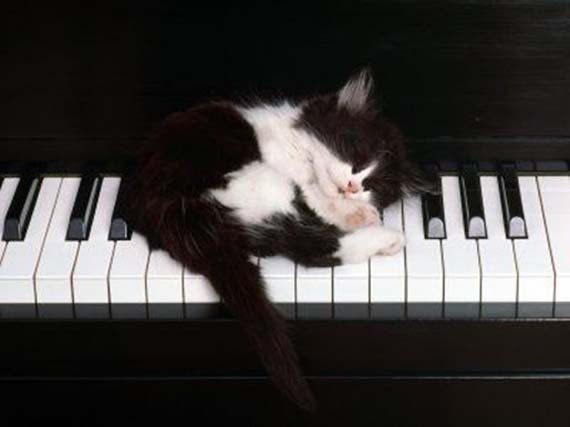 kitten_on_piano