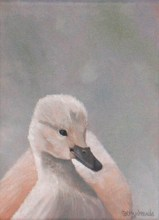 Cygnet_5c865ba8db2cd.jpg