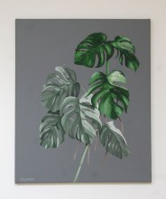 Monstera_58cba95c8704e.jpg